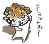 アフロのカツラを被った猫
