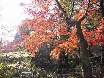 深大寺の紅葉2010