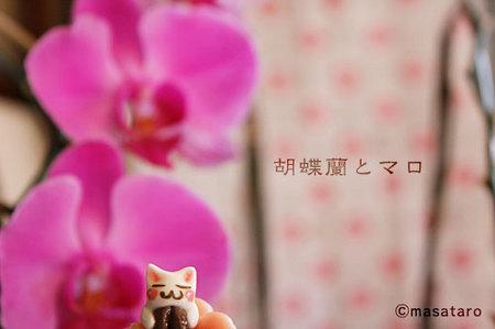 胡蝶蘭と猫