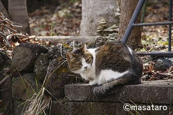 道で出逢った猫さん