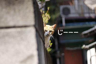 散歩途中で出逢った猫さん