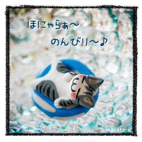 浮き輪と猫