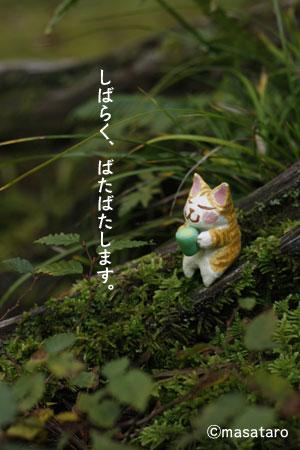 森とお茶のみ猫
