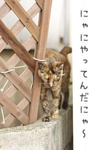 迷子の案内猫1