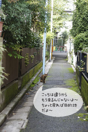 迷子の案内猫3