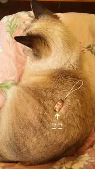 愛猫くぅちゃん
