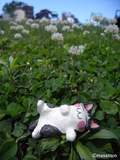 シロツメクサとあおむけ眠り猫