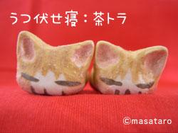 うつぶせ寝の猫:茶トラ