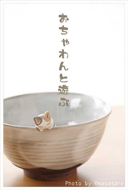 お茶碗と遊ぶ猫