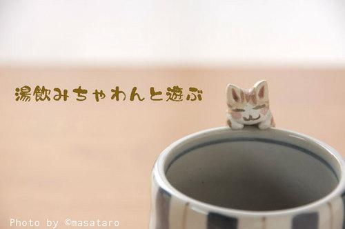 湯飲み茶碗と遊ぶ猫