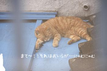 続・茶トラ猫のお昼寝